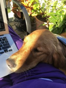 My grandpuppy Ramona helping me with my writing